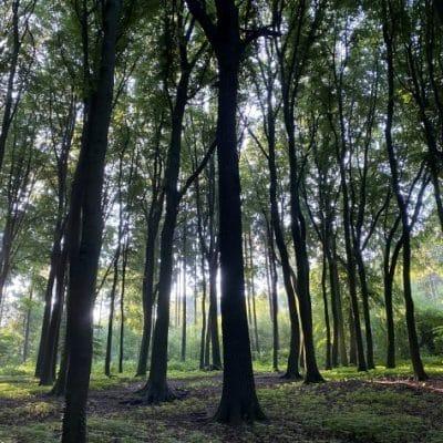 Wald als Symbolbild Wort & Bogen